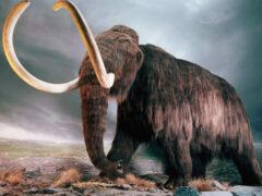 Ученые из Гарварда предложили заселить Сибирь мамонтами