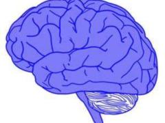 Ученые открыли связь нейромедиаторов в мозге с поведением больных аутизмом
