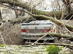 В Химках ребенок госпитализирован после падения на него дерева