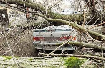 дерево упало авто