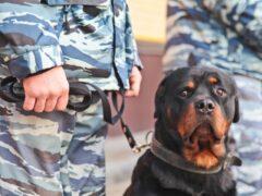 В Воронеже из-за угроз коллекторов пришлось эвакуировать школу