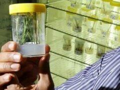 Ученые Австралии обнаружили траву, умеющую воскресать после гибели от засухи