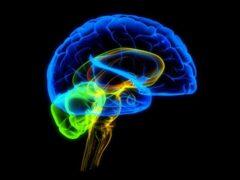 Ученые разработали новую методику для изучения аутизма и шизофрении