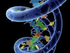 Ученые открыли, как генетическая информация транспортируется из ядра клетки