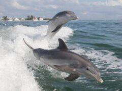 Содержание ртути в организме человека ученым помогли выявить дельфины
