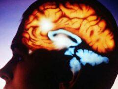 Британские ученые изучили систему вознаграждения мозга человека