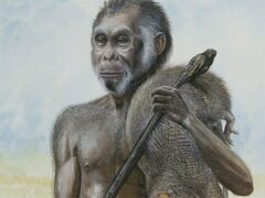 Китай: найдены кости контактировавших с человеком древних карликов