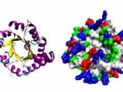 Определенные колебания атомов влияют на активность ферментов — ученые