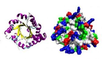 трехмерная структура ферментов