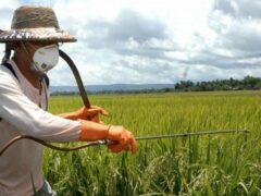 Пестициды для детей оказались опаснее, чем сигареты — ученые
