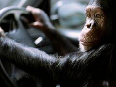 В Индии обезьяна села за руль автобуса и попала в ДТП