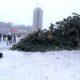 В Полоцке штормовой ветер повалил главную елку