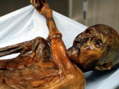 Ученые раскрыли тайну происхождения «ледяного человека» Отци