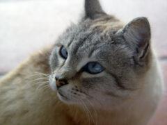 В Калинковичском районе кошка спасла своих хозяев от пожара