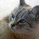 Учёные заявляют, что гладить кошек смертельно опасно