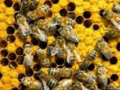 Пчелы и муравьи помогут ученым понять причины самоубийств среди людей