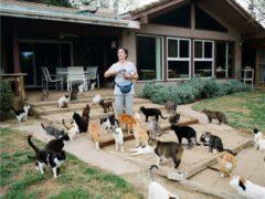 В США кошатница приютила 1100 кошек