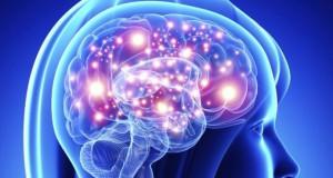 мозг исследования