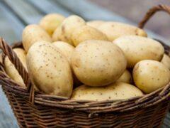 Частое употребление картофеля может привести к сахарному диабету