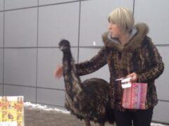 Очевидцы: по улицам Красного Села разгуливал цирковой страус