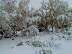 Самую жаркую пустыню Узбекистана засыпало снегом
