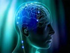Физики выяснили, почему кора мозга человека укладывается в извилины