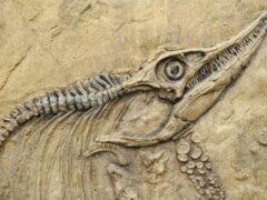 Археологи обнаружили в Японии седьмого динозавра