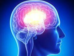 Американские биоинженеры вырастили человеческий мини-мозг