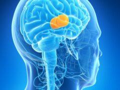 Ученые обнаружили в мозге человека механизм формирования воспоминаний