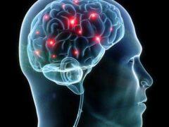 Ученые: Обнаружены участки мозга, отвечающие за правописание