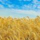 В США считают, что Украина должна стать сельскохозяйственным супергосударством