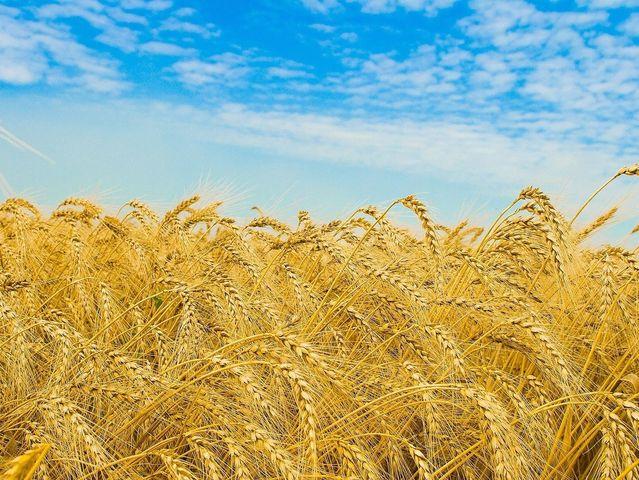 Посол США: Украина должна стать сельскохозяйственной супердержавой