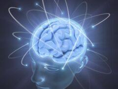 Ученые: При обучении мозг человека «стирает» старую информацию