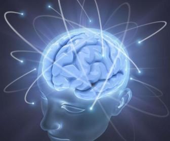 мозг интеллект