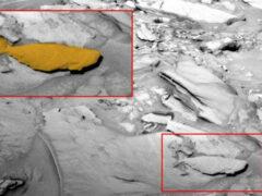 Уфологи нашли на Марсе окаменевшую рыбу