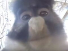 Обезьяна в США украла GoPro у туриста и сделала репортаж из клетки