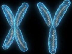 Ученые: Y-хромосома мешала скрещиваться неандертальцам и древним людям