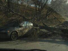 На западе Москвы упавшее дерево придавило на ходу Volvo