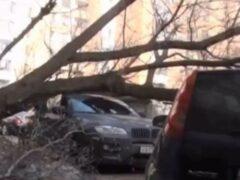 В центре Москвы упавшие деревья повредили четыре автомобиля