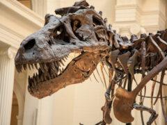 Британские ученые назвали настоящую причину вымирания динозавров