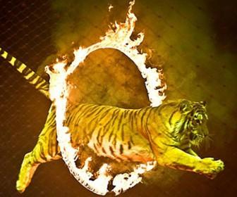 тигр в цирке
