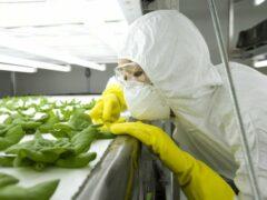 Учёные США считают генно-модифицированные продукты безопасными