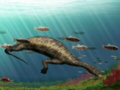 Ученые обнаружили в Китае морского динозавра-вегетарианца