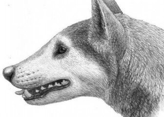 древняя собака