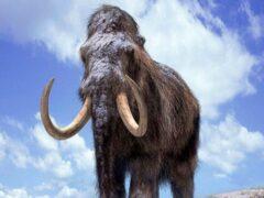 Российские ученые собираются клонировать мамонта