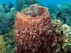 В Тихом океане нашли самую большую губку в мире