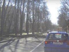 В Пушкине на автобус с пассажирами рухнуло дерево