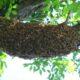 В Москве с территории детсада вывезли 4 килограмма пчел