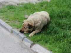 В Пушкинском районе обнаружили массовое захоронение собак