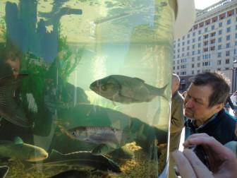 рыбы люди